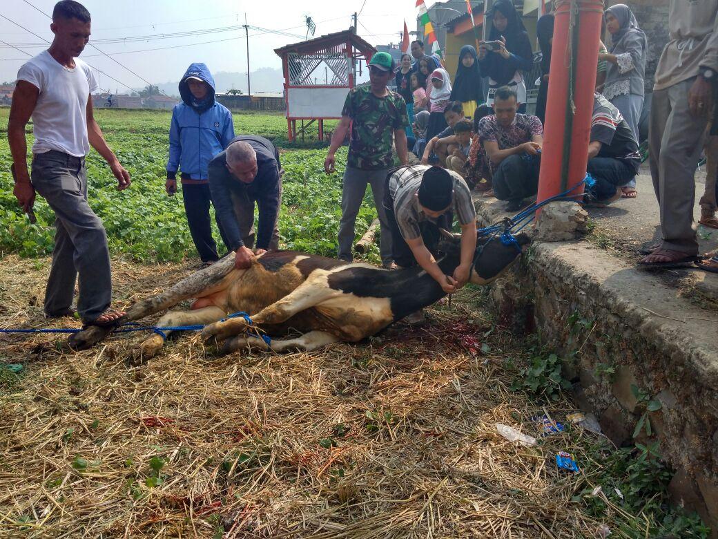 Photo of Kurban di Mesjid Al Fallah Batujajar 2 Sapi dan 23 Domba