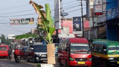Photo of Jalan Cihampelas-Cililin Ditanami Pohon Pisang